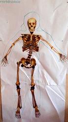 lichaam 6